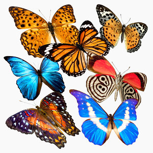 butterflies flies simple 3D model