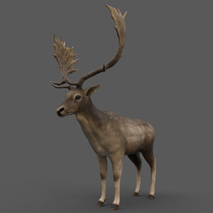 3D model fallow deer