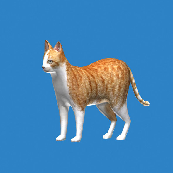 cat modelled 3D