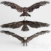 3D model hawk
