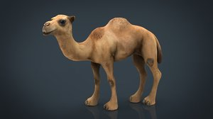 camel 3D