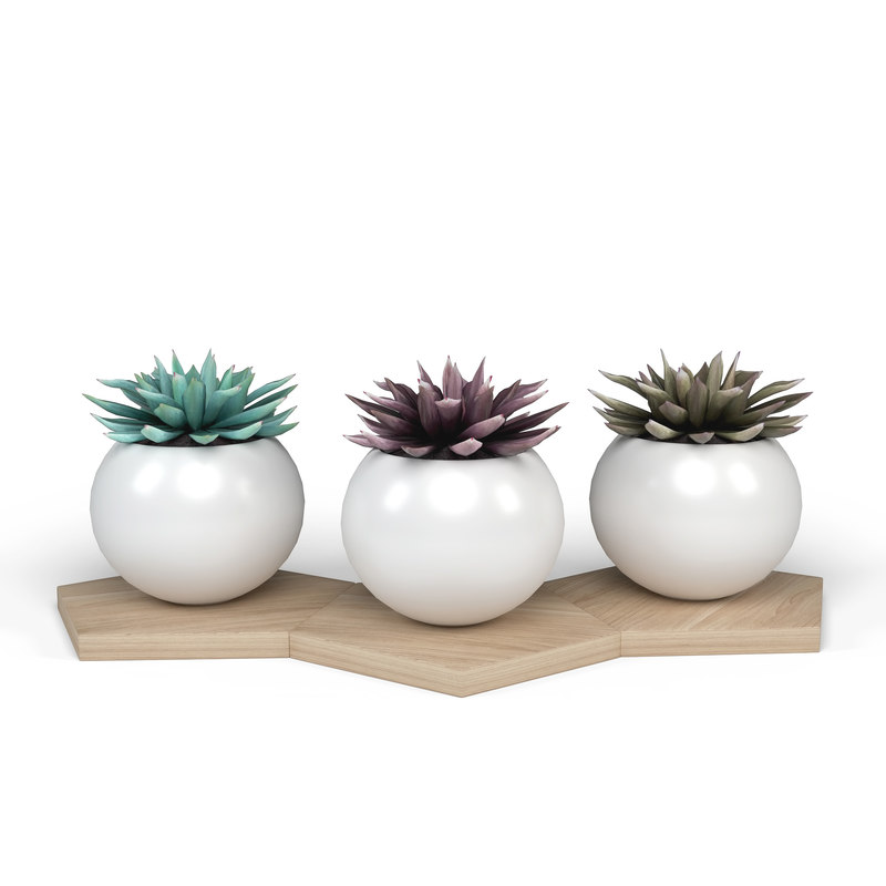 potted plant decoration 3D model
