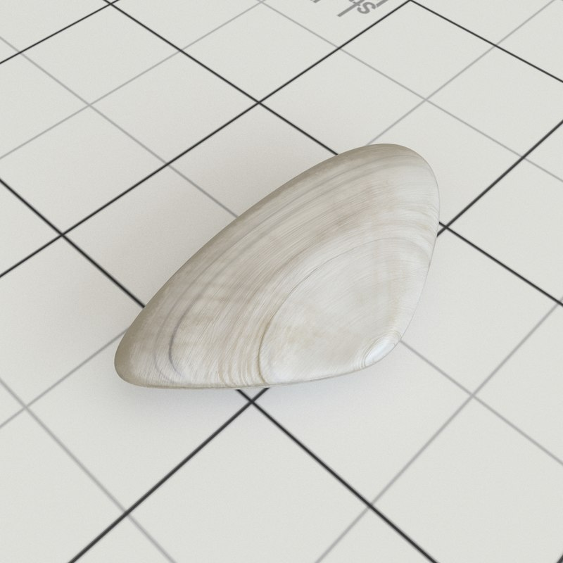 pipi shell 3D