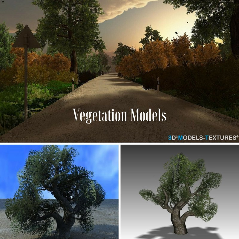 3D model vegetation trees