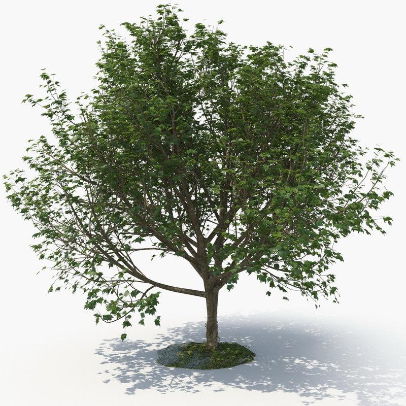 3D realistic tree model