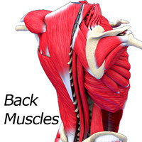 Back Muscle Textured