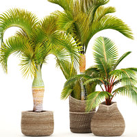 Collection of tropical plants