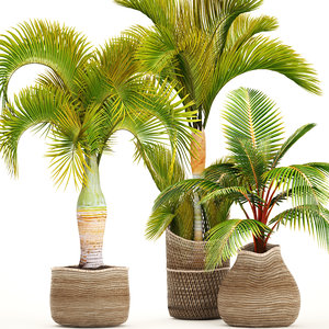 3D tropical plants model