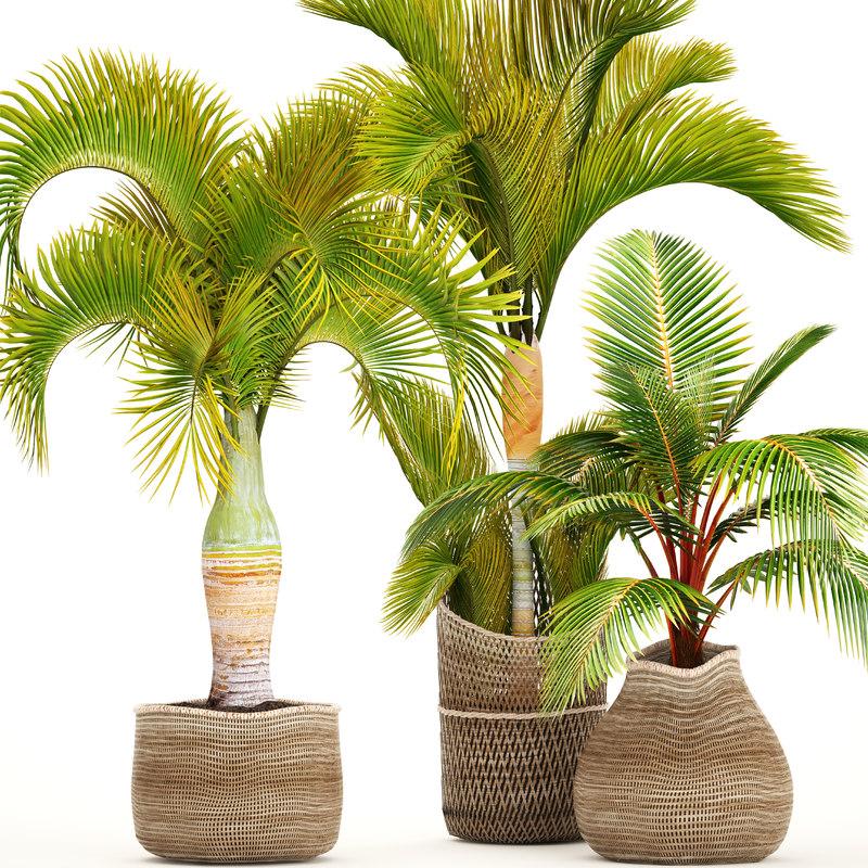 3D tropical plants model