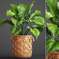 3D tropical plant pot model