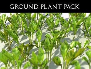 3D model ground plant pack