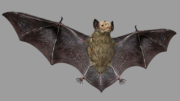 bat rigging animation 3D