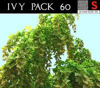 3D model ivy pack 60