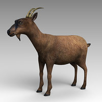 domestic goat 3D