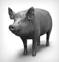 3D model pig realistic