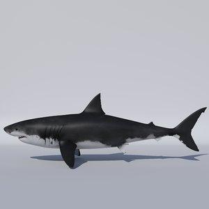 3D apex great white shark model