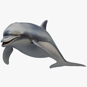 3D model dolphin animation