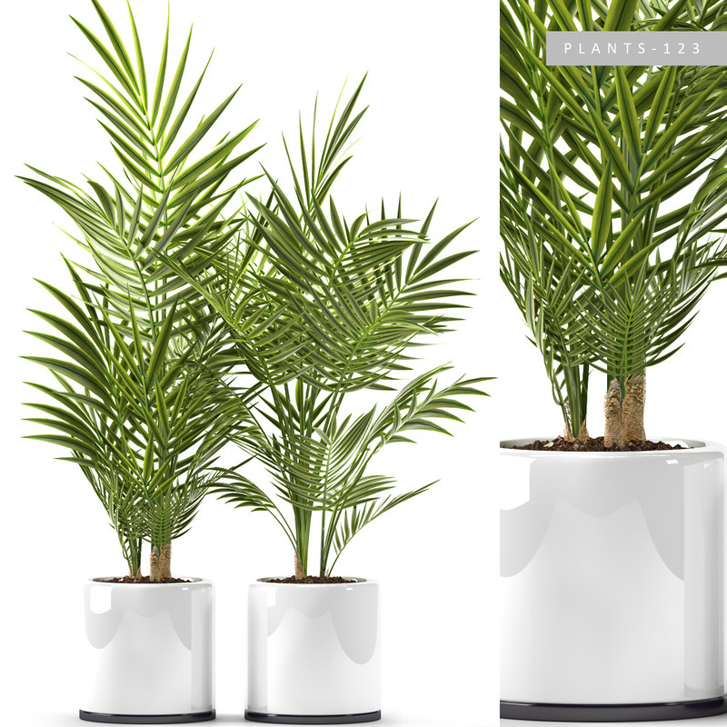 plants 123 palm 3D model
