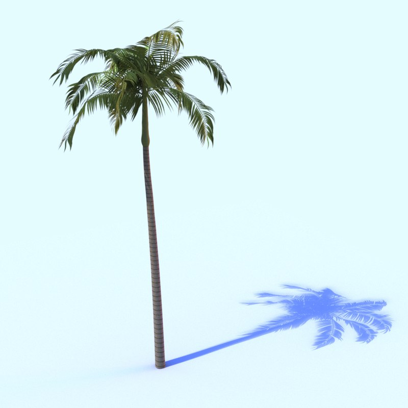 3D model bangalow palm tree