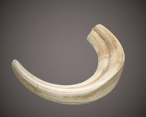 warthog tusk 3D model
