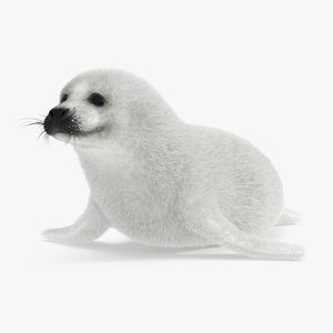 harp seal juvenile fur 3D model