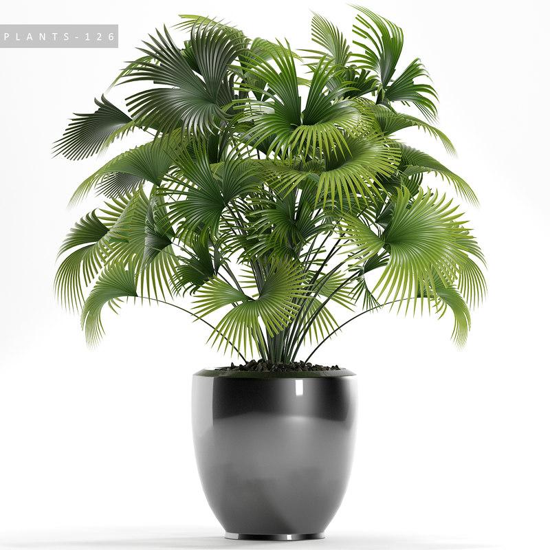 3D palm plants