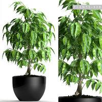 plants 128 3D