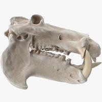 hippopotamus skull 3D model