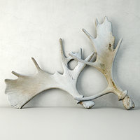 3D model naturally-shed moose antlers