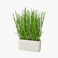 Grass in pot 03
