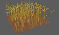 3D model wheat field