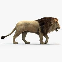 lion fur 3D