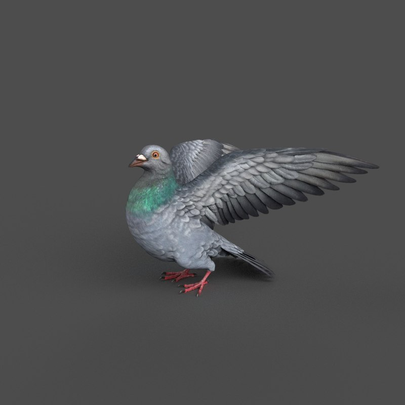 pigeon rigged 3D model