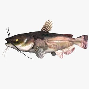 3D black bullhead catfish
