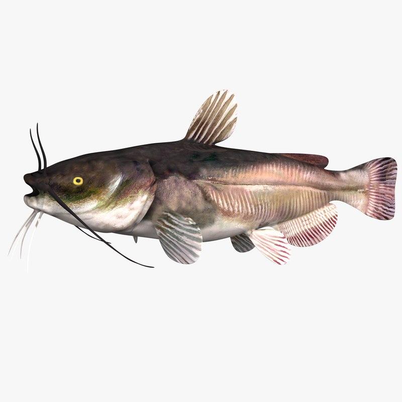 3D black bullhead catfish