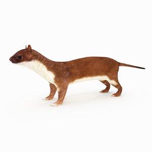 3D model weasel