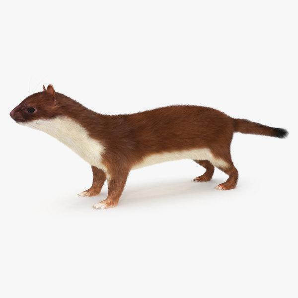 weasel fur 3D