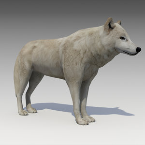 arctic wolf model