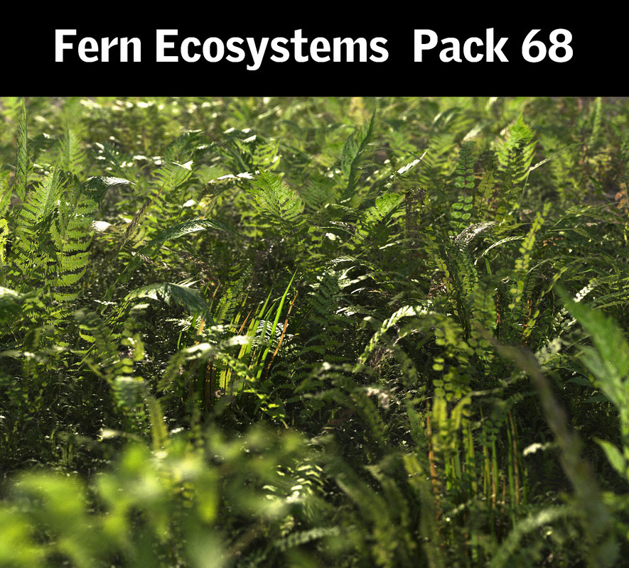 3D fern ecosystems pack 68 model