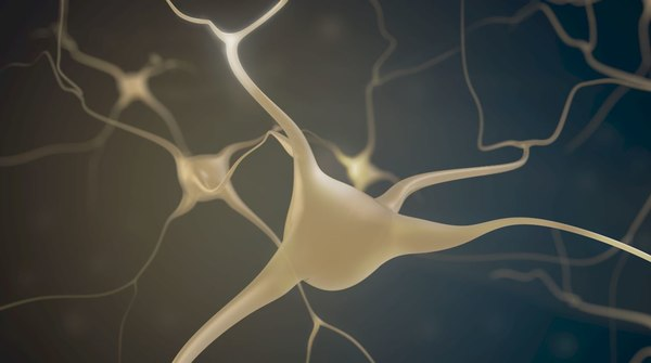 brain neuron 3D