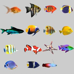 3D fish aquarium model