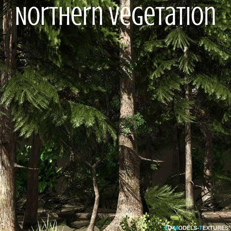 3D northern vegetation