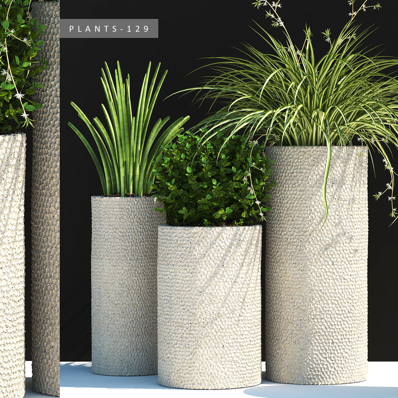 3D plants pot garden model
