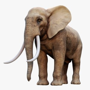 3D african elephant rigged model