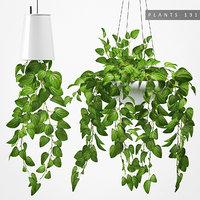 3D hanging plant 131 model