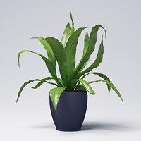 3D model asplenium plant