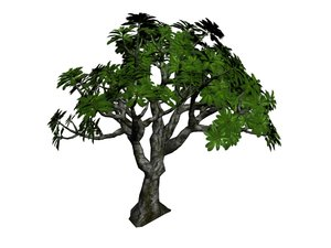 3D frangipani tree model