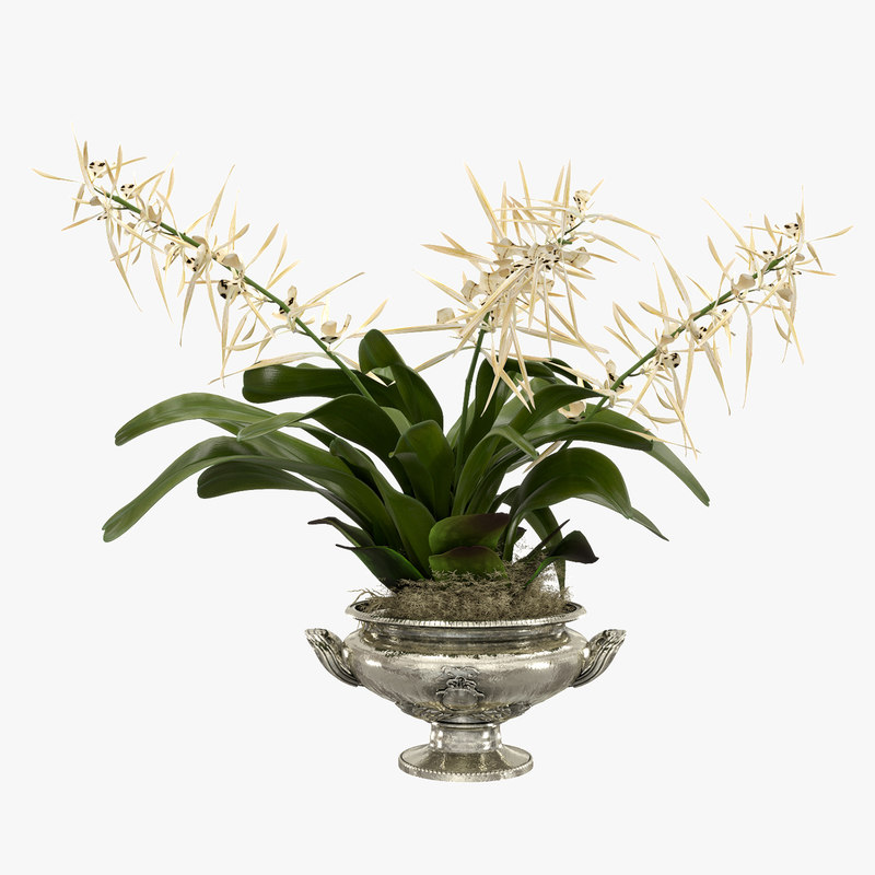 3D model orchid brassia flower vase