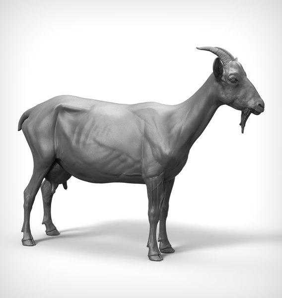 goat realistic model