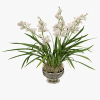 3D orchids cymbidium model